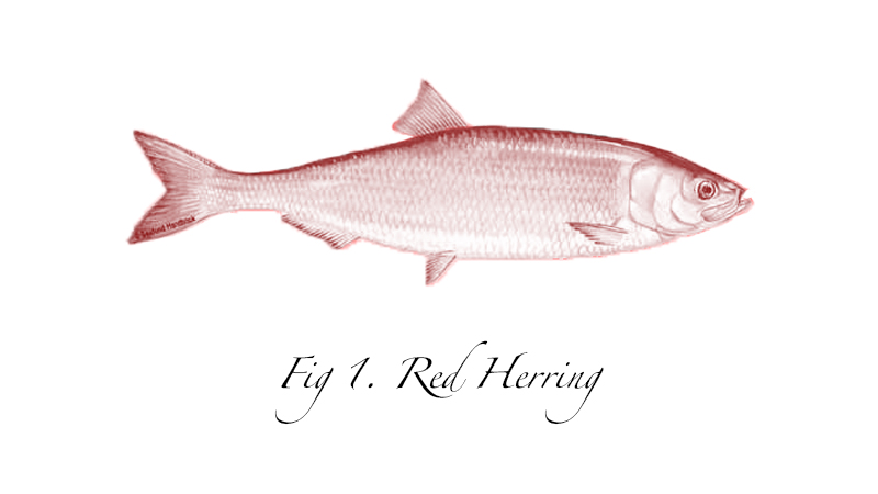 red herring sketch